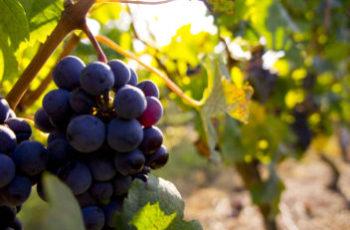 offre invino Bordeaux