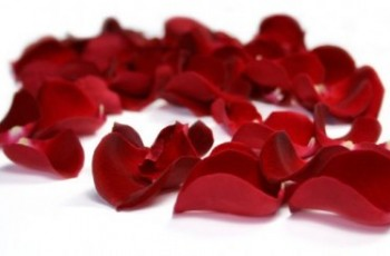 petale-rose-rouge-e1413882019339